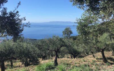 Wie erkenne Ich hochwertiges Olivenöl?