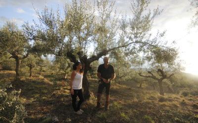 Olivenernte 2020 – OlivenGut
